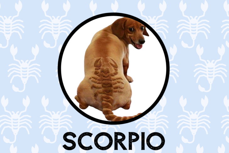 Scorpio Dog Personality: What Being A Scorpio Says About Your Dog