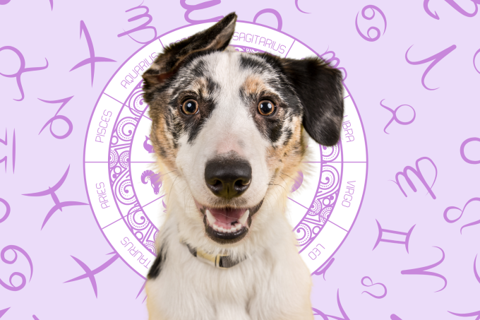Your Dog's Weekly Horoscope 2020: March 30-April 5