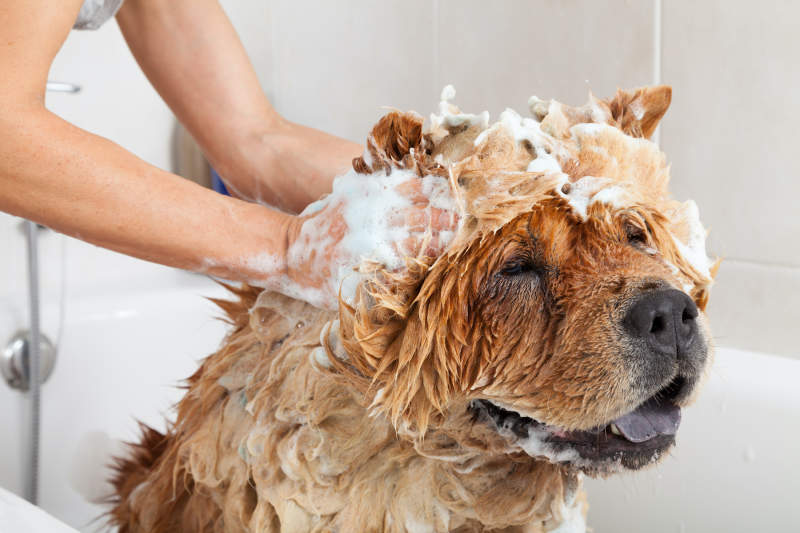 Dog Bathing 101: Everything To Know About Keeping Your Dog Clean