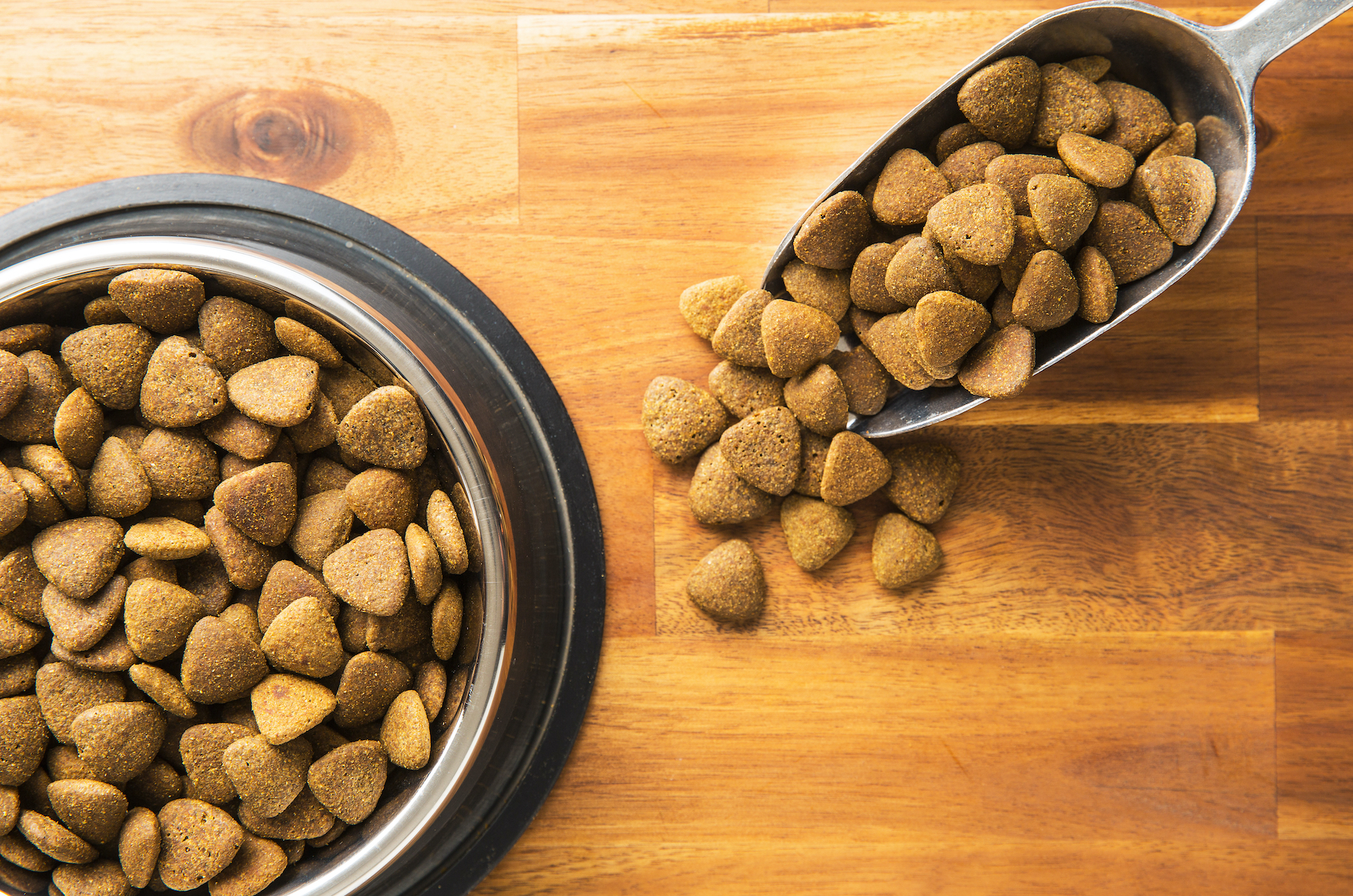 Canva - Dry kibble dog food
