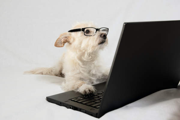 Canva - Terrier wearing glasses and working at laptop
