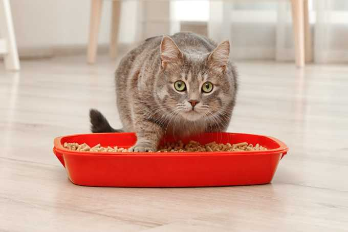 6 Litter Box Mistakes You Don't Want To Make