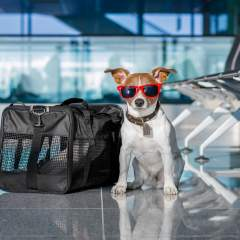 5 Pet-Friendly Airlines For Flying With Your Dog