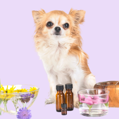 Do Essential Oils Work On Pets? Are They Safe?