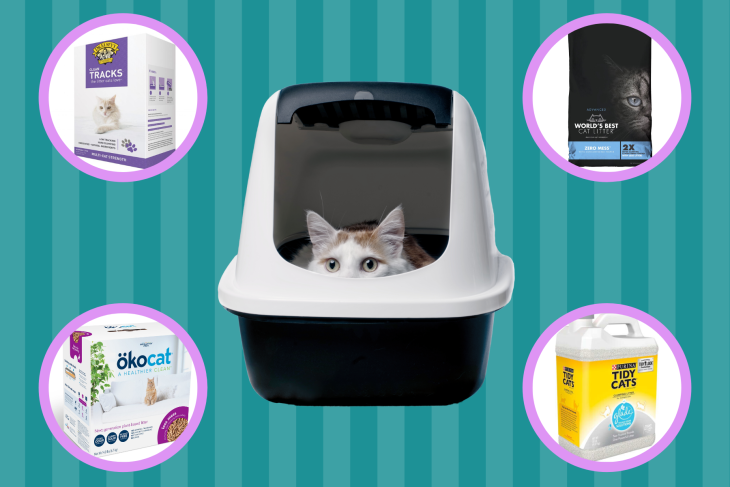 Best Cat Litter 2021: We Tested Different Cat Litters So You Don't Have To