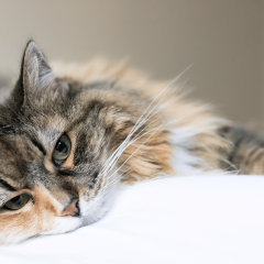 Cat Seizures: Signs, Causes, Treatment & Prevention