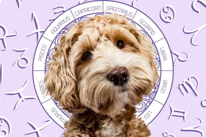 Your Dog's Weekly Horoscope 2020: July 13-19