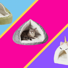 The 14 Best Cat Beds Of 2021, For Every Type Of Sleeper