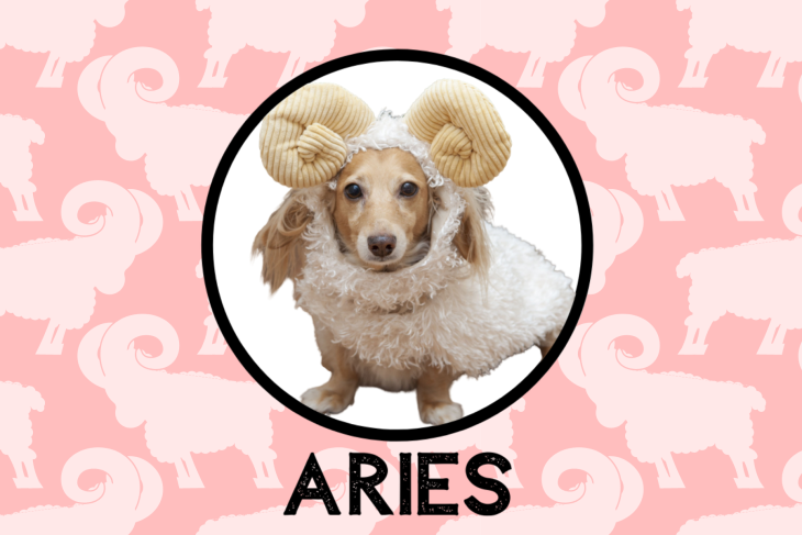 Aries Dog Personality: What Being An Aries Says About Your Dog