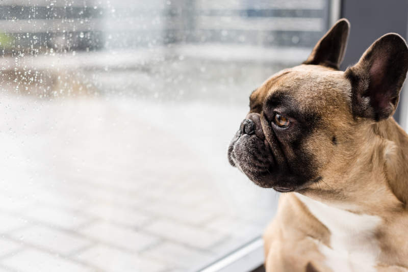 8 Tips & Tricks To Keep Your Dog Busy During Isolation