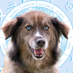 Your Dog's Weekly Horoscope 2020: July 20-26