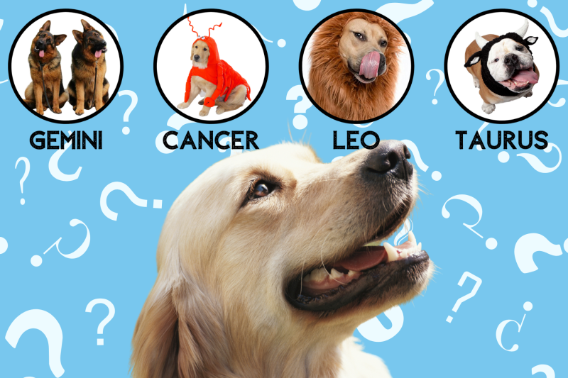 Pawp Quiz: What Zodiac Sign Is Your Dog Really?