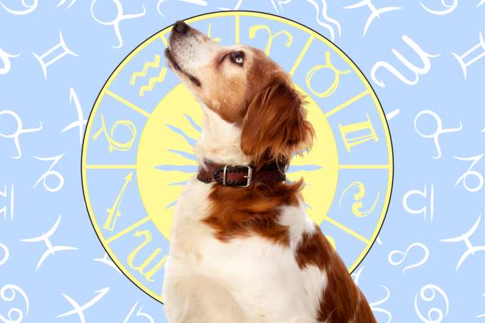 Your Dog's Weekly Horoscope 2020: March 16-22