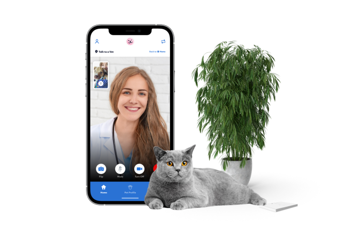 Vet video call and cat