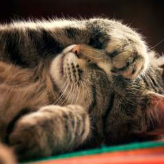 What Your Cat's Favorite Sleeping Position Says About Their Personality