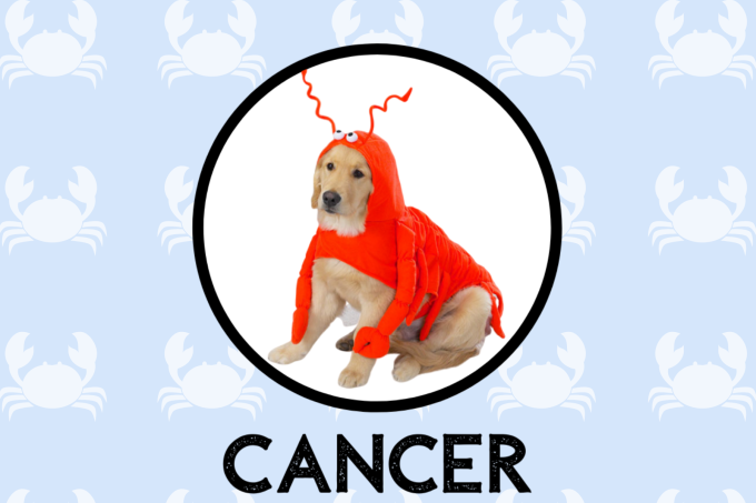 Cancer Dog Personality: What Being A Cancer Says About Your Dog