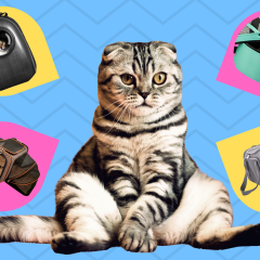 The Best Cat Carriers Of 2021 For Airline & Everyday Travel