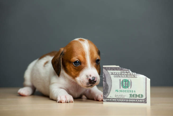 How Much Does A Dog Cost? A Financial Guide To Owning A Dog