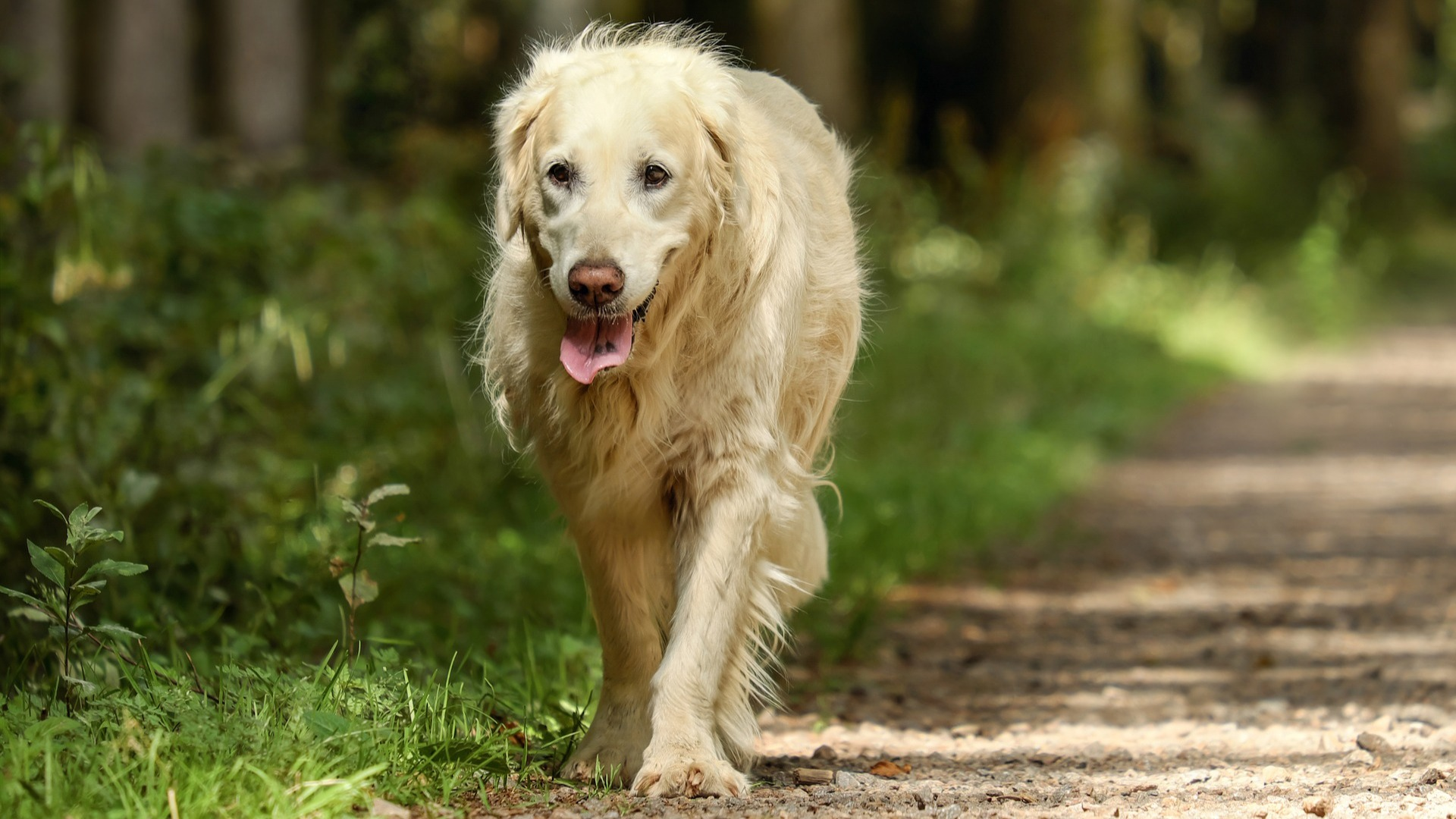 6 Ways to Care for Your Aging Dog