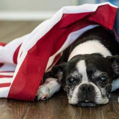Is Your Dog Afraid Of Fireworks? 8 Tips To Keep Your Anxious Dog Calm