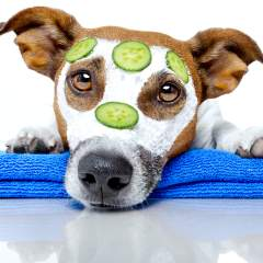 So Your Dog Has Pimples: What Causes Canine Acne & How To Treat It