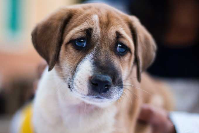 New York To Become The Third State To Ban Pet Stores From Selling Puppies