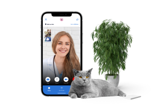 Vet on a video chat with a gray cat