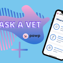 Ask A Vet: Pawp Online Vets Talk Joint Issues & Caring For Senior Pets