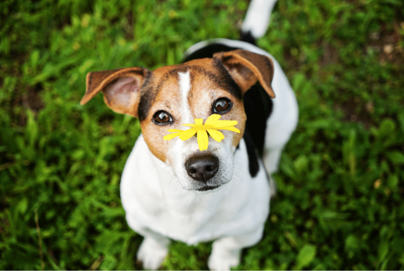 Dog Allergies: Signs, Symptoms, Diagnosis & Treatment Of Allergies In Dogs