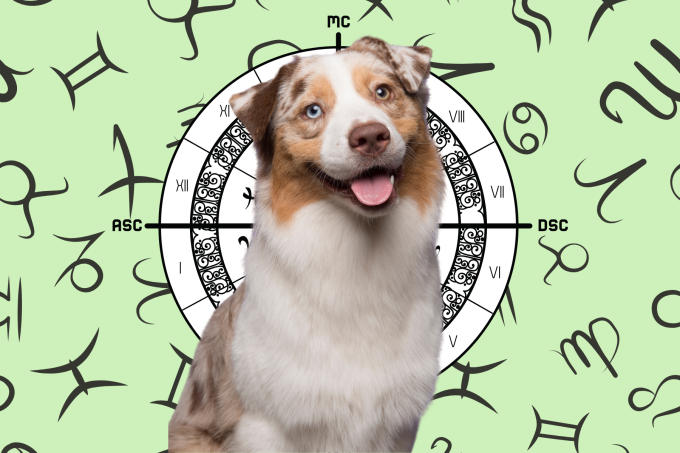 Your Dog's Weekly Horoscope 2020: May 18-24