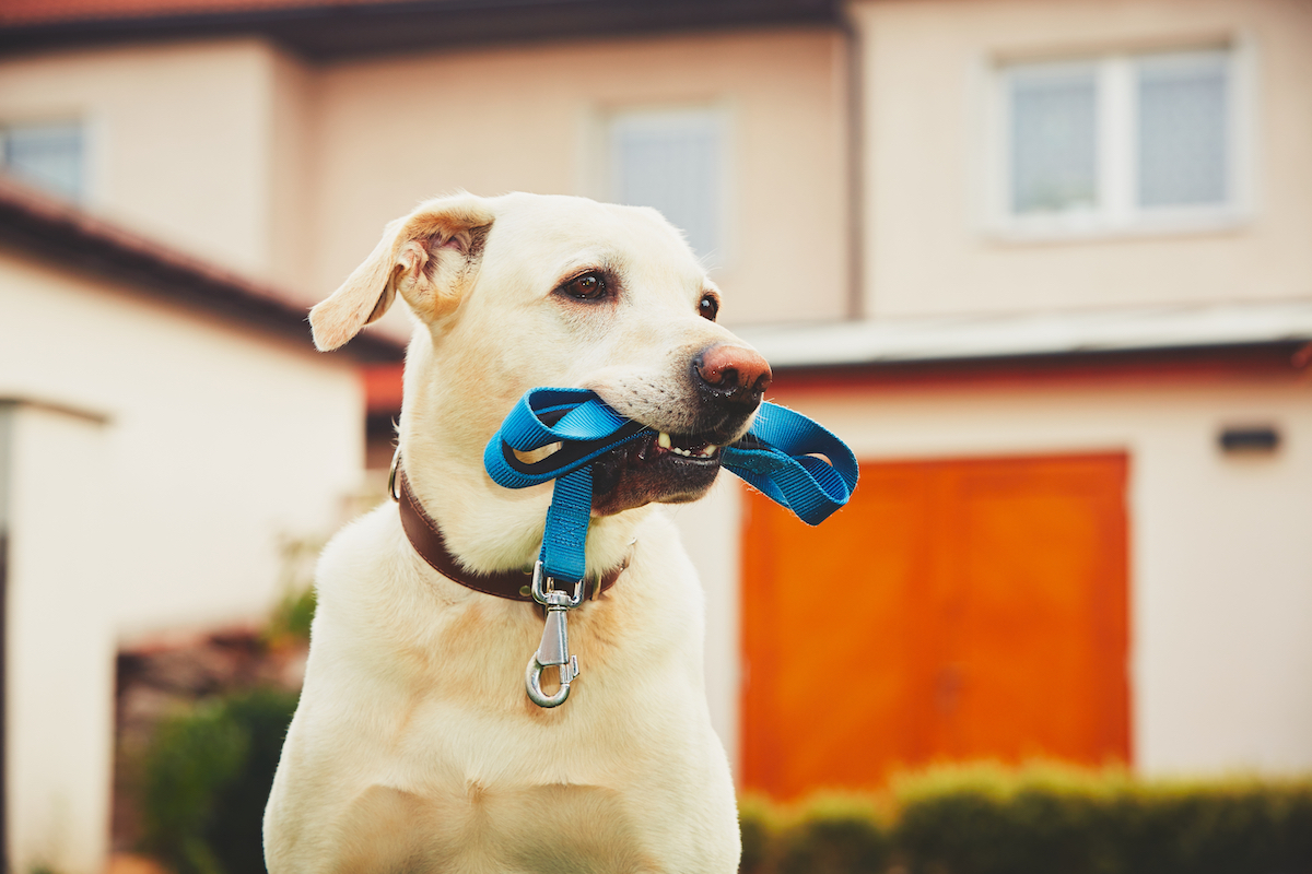 Canva - Dog with leash