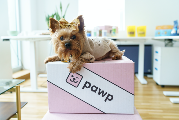 dog on top of pawp box