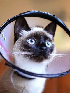 Cat Spaying/Neutering: What To Know & How To Care For Your Cat