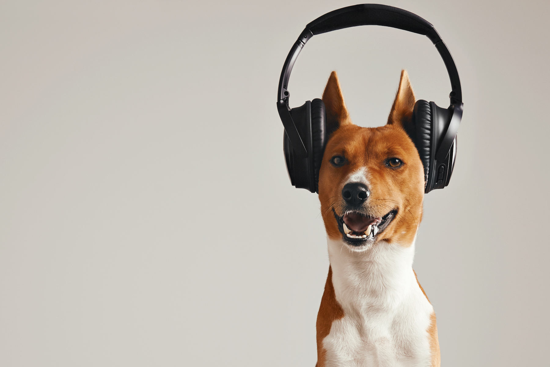 Canva - Happy basenji dog wearing headphones