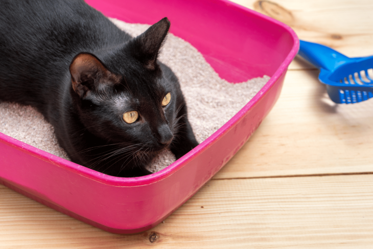 Cat Constipation: Signs Your Cat Is Constipated & How To Help
