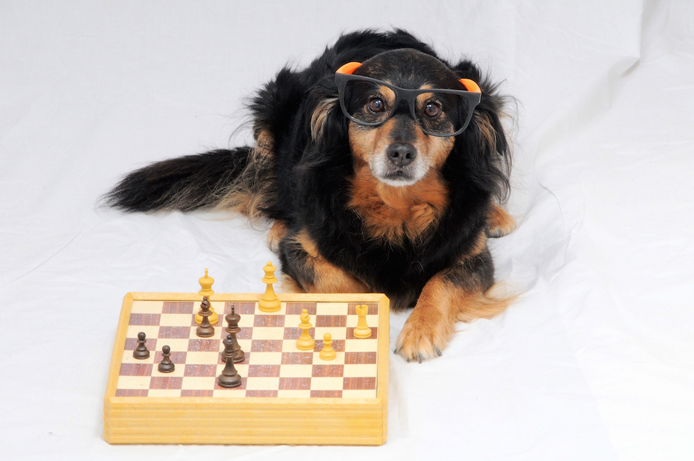 Canva - Smart Dog Playing Chess