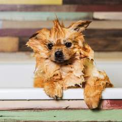 10 Best Groomers In NYC Who Will Get Your Pet Ready For The Puparazzi