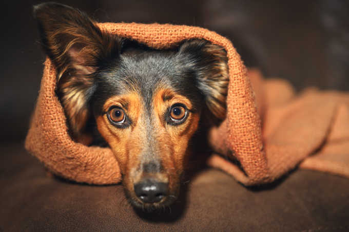 Does My Dog Have Anxiety? And How Can I Help?