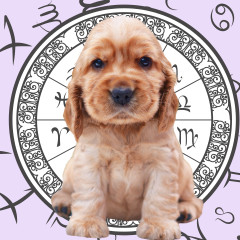 Your Dog's Weekly Horoscope 2020: May 25-31