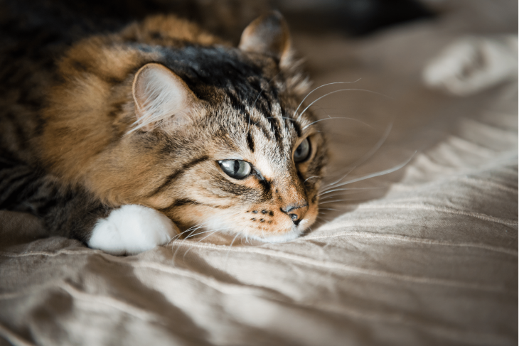 What Can I Give My Cat For Pain? Signs Your Cat's In Pain & How To Help