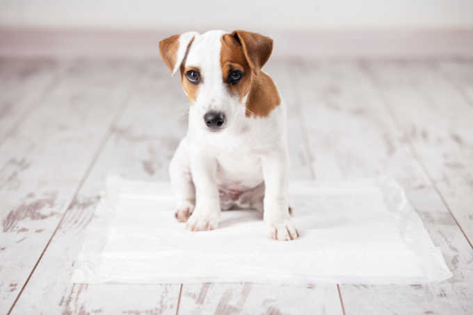 How To Potty Train Your New Puppy (When You're Already Super Busy)