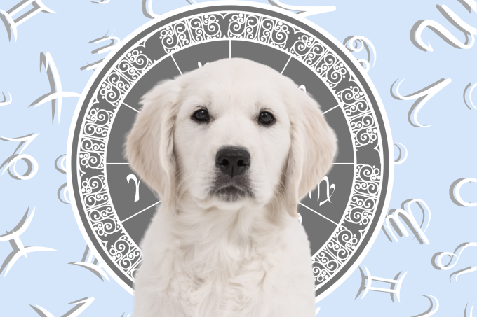 Your Dog's Weekly Horoscope 2020: August 10-16