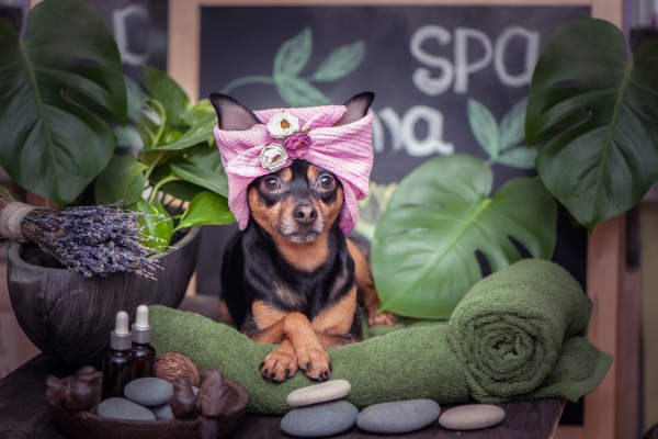 Canva - Cute pet relaxing in spa wellness . Dog in a turban of a towel among the spa care items and plants. Funny concept grooming, washing and caring for animals