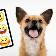 Quiz: Can You Guess The Dog Breeds Using Only Emojis?