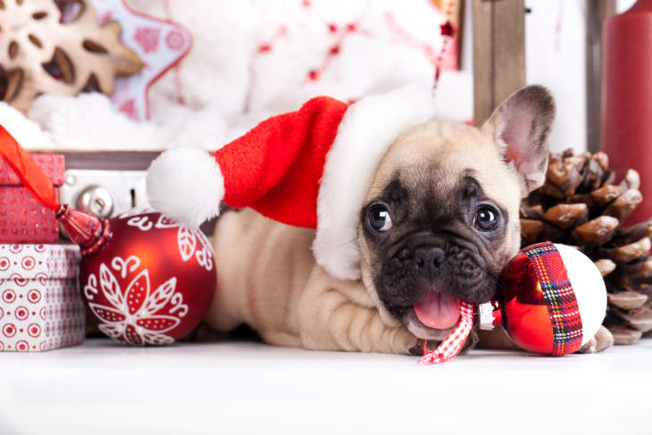 13 Fun & Useful Holiday Gifts For Every Type Of Dog Under $25