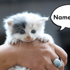 Girl Cat? 234 Gorgeous & Unique Names For Your Female Cat
