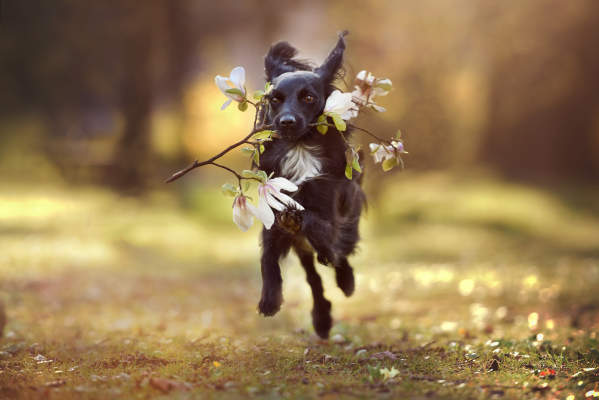 Canva - Dog Running with Flowers in His Mouth