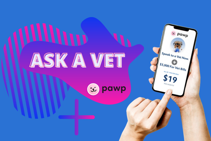 Ask A Vet: Pawp Online Vets Talk Teething Puppies & Cats That Don't Purr