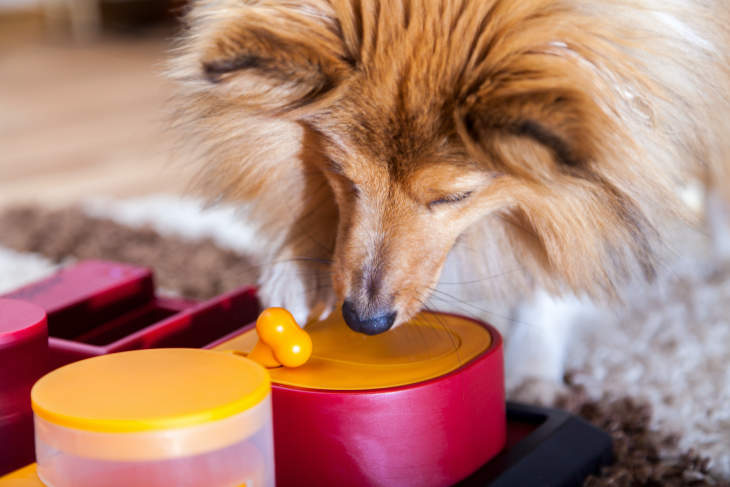 The 25 Best Interactive Dog Toys