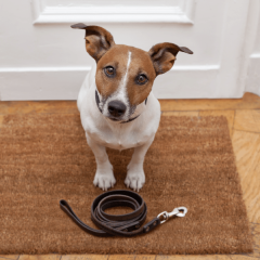 Dog Poop: What Your Dog's Poop Says About Their Health